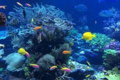 underwater-408904_640